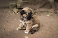 Leuk weinig puppy Stock Afbeelding