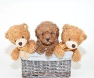 Welk Puppy? stock foto's
