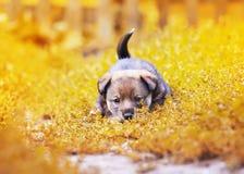 Leuk weinig puppy die op het gras in de pret van de tuinzomer lopen royalty-vrije stock afbeeldingen