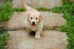 Leuk weinig puppy vanuit hoogste invalshoek Stock Foto's
