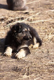 Leuk weinig puppyzitting royalty-vrije stock afbeeldingen