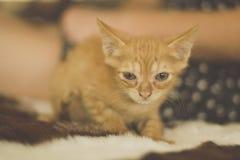 Leuk weinig rood katje Royalty-vrije Stock Foto