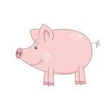 Leuk weinig varken Stock Foto's