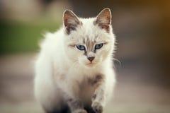 Leuk Wit Katje Royalty-vrije Stock Afbeeldingen