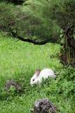 Leuk wit konijn in de tuin Stock Fotografie