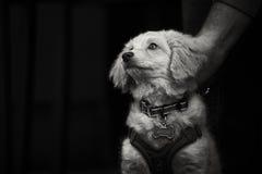 Leuk wit puppy Stock Fotografie