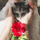 Leuk, zoet katje, die op vrouwelijke handen liggen royalty-vrije stock foto