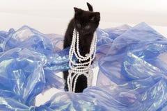 Leuk zwart katje dat kleding-omhoog speelt Royalty-vrije Stock Fotografie