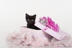 Leuk zwart katje in roze aanwezige giftdoos Royalty-vrije Stock Afbeelding