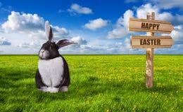 Leuk zwart wit konijn op groene weide op een zonnige dag royalty-vrije stock foto