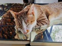 Leuke Aanbiddelijke Binnenlandse Cat Sleeping op Spiegellijst royalty-vrije stock afbeeldingen