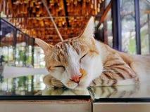 Leuke Aanbiddelijke Binnenlandse Cat Sleeping op Spiegellijst stock fotografie