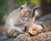 Leuke aapfamilie stock afbeeldingen