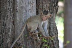 Leuke apen Royalty-vrije Stock Fotografie