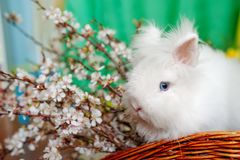 Leuke baby bunniy zitting in een houten mand op de lijst met bloemen royalty-vrije stock foto's
