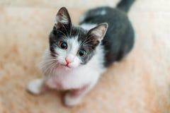 Leuke Baby Cat Portrait At Home stock afbeeldingen