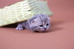 Leuke babykatten Royalty-vrije Stock Afbeelding