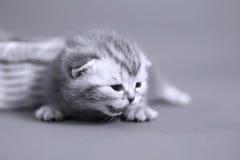 Leuke babykatten Royalty-vrije Stock Foto's