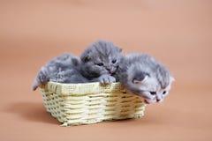 Leuke babykatten Royalty-vrije Stock Foto