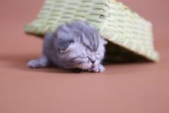 Leuke babykatten Stock Afbeelding