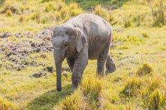 Leuke babyolifant stock afbeeldingen