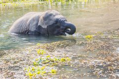 Leuke babyolifant stock foto's