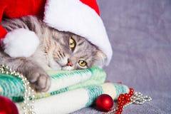 Leuke bonthuiskat in Kerstmanhoed met Kerstmisballen en parels Royalty-vrije Stock Afbeeldingen