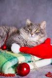 Leuke bonthuiskat met Kerstmanhoed, Kerstmisballen en parels  Royalty-vrije Stock Fotografie