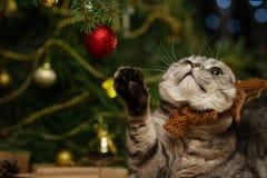 Leuke Britse kat met een hoed met hoornen van een hert Rudolph, tegen de achtergrond van een Kerstboom en lichten Kerstmis, Nieuw stock foto's