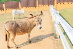 Leuke bruine ezel Stock Foto