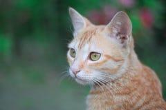 Leuke bruine kat royalty-vrije stock foto's