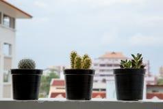 Leuke cactuspotten op balkon Stock Fotografie