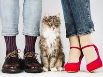 Leuke, charmante katje en Benen van een jong paar stock afbeelding