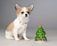 Leuke chihuahuapuppy en stuk speelgoed Kerstmisboom Royalty-vrije Stock Afbeeldingen