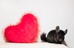 Leuke chinchilla met rood hart op witte achtergrond De dag van de valentijnskaart stock fotografie