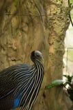 Leuke close-upfoto van wilde vogel Royalty-vrije Stock Afbeelding
