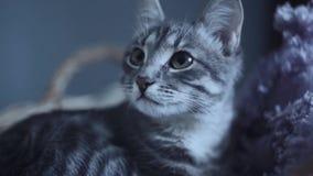 Leuke de katten verbergende slaap van het gestreepte katkatje in een mand bij nacht of avond stock footage