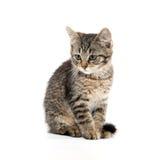 Leuke die gestreepte kat op wit wordt geïsoleerd Stock Foto