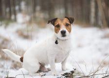 Leuke die hondzitting bij de winterbos op stomp met sneeuw wordt behandeld Stock Foto