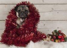 Leuke die Kerstmispug puppyhond met klatergoud wordt verfraaid, die op schapehuid met ornamenten gaan zitten royalty-vrije stock foto's