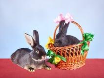 Leuke die konijntjes en een mand met gekleurde linten wordt verfraaid Stock Foto