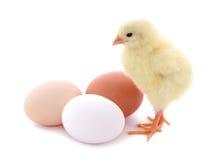 Leuke die kuiken en eieren op witte achtergrond wordt geïsoleerd Stock Afbeeldingen