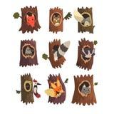 Leuke dieren en vogels die in hol van boomreeks, uitgeholde uit oude boom en vos, uil, wolf, wasbeer, specht zitten en royalty-vrije illustratie