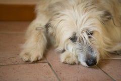 Leuke droevige hond Royalty-vrije Stock Afbeelding