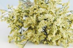 Leuke droge bloemen in geel Royalty-vrije Stock Foto's