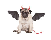 Leuke duivelse pug puppyhond omhoog gekleed die voor Halloween, op witte achtergrond wordt geïsoleerd Stock Afbeelding