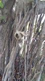 Leuke eekhoorn op de boom Stock Foto