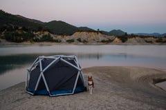 Leuke eenzame basenjihond naast tent op zonsondergang stock fotografie