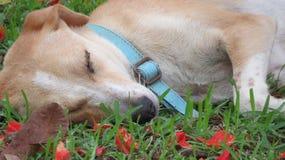 Leuke en Hond die rusten ontspannen royalty-vrije stock foto