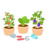 Leuke en kleurrijke plantaardige pot Vector Illustratie